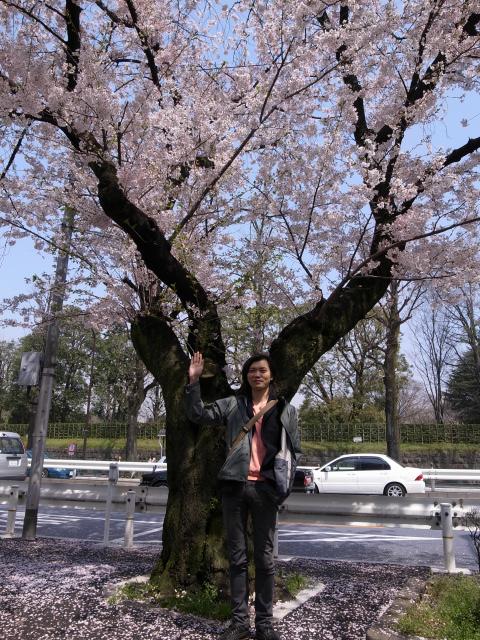桜と信岡氏