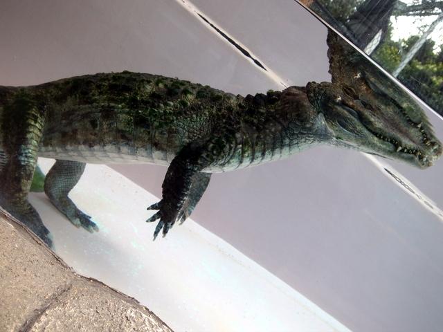 恐竜みたいなワニ
